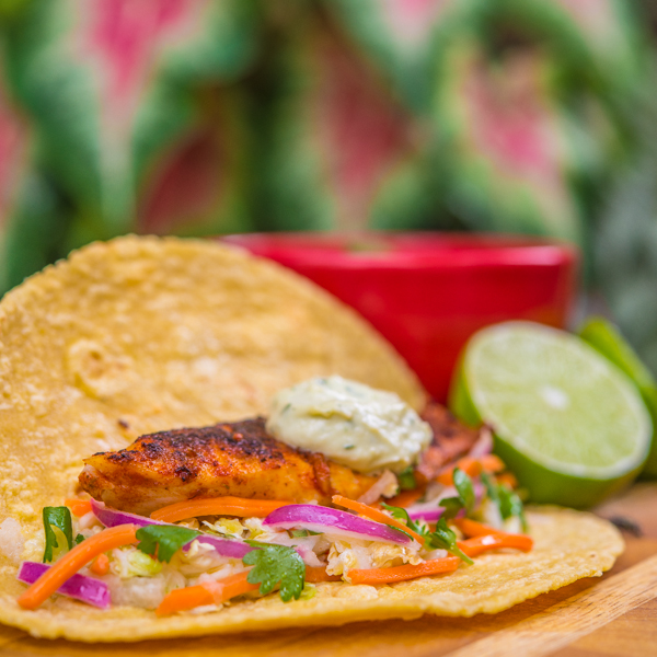 Blackened Tilapia Tacos with Jicama Coleslaw 5